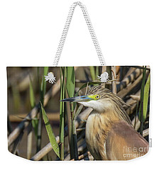 Weekender Tote Bag featuring the photograph Squacco Heron - Ardeola Ralloides by Jivko Nakev