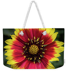 Weekender Tote Bag featuring the photograph Sunflower by Ed Clark