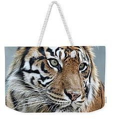 The Gaze Of A Tiger Weekender Tote Bag