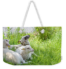 Weekender Tote Bag featuring the photograph Three Little Lambs by Patricia Hofmeester