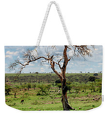 Weekender Tote Bag featuring the photograph Tree by Charuhas Images