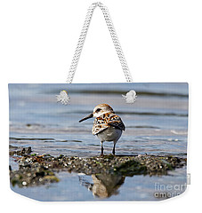Weekender Tote Bag featuring the photograph Western Sandpiper by Sue Harper