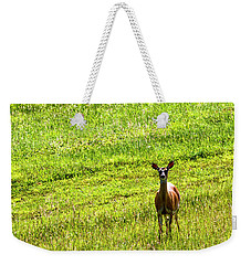 Weekender Tote Bag featuring the photograph Whitetail Deer And Hay Rake by Thomas R Fletcher