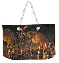 Weekender Tote Bag featuring the photograph Whitetail Deer At Waterhole Texas by Dave Welling