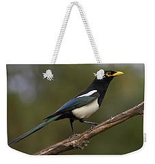Yellow-billed Magpie Weekender Tote Bag