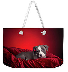Weekender Tote Bag featuring the photograph American Pitbull Puppy by Peter Lakomy