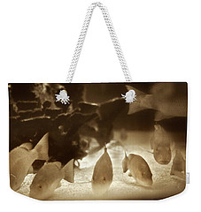 Weekender Tote Bag featuring the photograph 1954 Fish At Marineland Florida by Marilyn Hunt