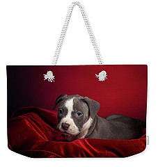 American Pitbull Puppy Weekender Tote Bag by Peter Lakomy