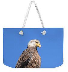 Bald Eagle Juvenile Perched Weekender Tote Bag
