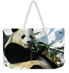 Bao Bao Sittin' In The Snow Taking A Bite Out Of Bamboo1 Weekender Tote Bag