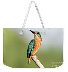 Common Kingfisher Alcedo Atthis Weekender Tote Bag
