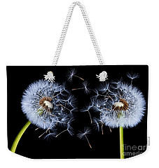 Weekender Tote Bag featuring the photograph Dandelion On Black Background by Bess Hamiti
