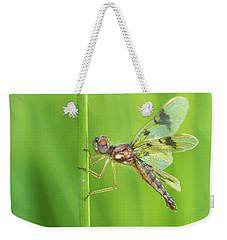 Eastern Amberwing Weekender Tote Bag