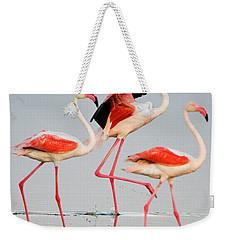 Greater Flamingos Phoenicopterus Roseus Weekender Tote Bag by Panoramic Images