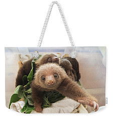 Weekender Tote Bag featuring the photograph Hoffmanns Two-toed Sloth Choloepus by Suzi Eszterhas