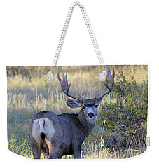 Weekender Tote Bag featuring the photograph Looking Back by Shane Bechler