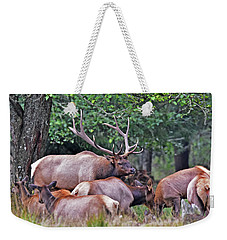 Weekender Tote Bag featuring the photograph  Royal Roosevelt Bull Elk by Jack Moskovita