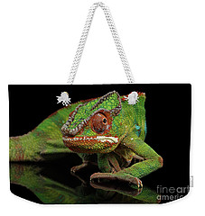 Sneaking Panther Chameleon, Reptile With Colorful Body On Black Mirror, Isolated Background Weekender Tote Bag by Sergey Taran