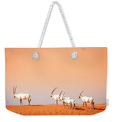 Weekender Tote Bag featuring the photograph Arabian Oryx by Alexey Stiop
