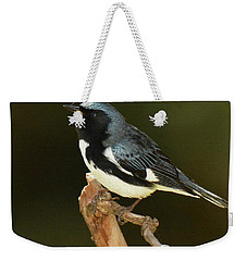 Black-throated Blue Warbler Weekender Tote Bag by Alan Lenk