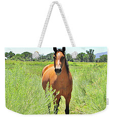 Inquisitive Weekender Tote Bag by Marilyn Diaz