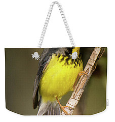 Canada Warbler Weekender Tote Bag by Alan Lenk