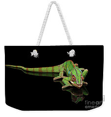 Sneaking Panther Chameleon, Reptile With Colorful Body On Black Mirror, Isolated Background Weekender Tote Bag