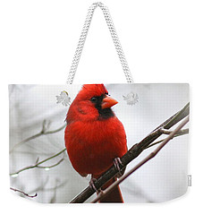 4772-001 - Northern Cardinal Weekender Tote Bag