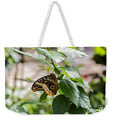 Owl Butterfly Weekender Tote Bag