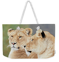 Two Lions Close Together Weekender Tote Bag by Nick Biemans