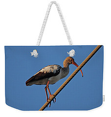 Weekender Tote Bag featuring the photograph 8- Brown Ibis by Joseph Keane