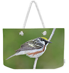 Chestnut-sided Warbler Weekender Tote Bag by Alan Lenk