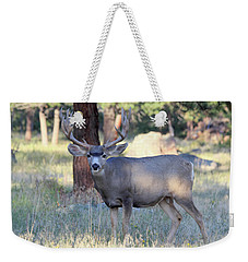 Weekender Tote Bag featuring the photograph 8x8 Mule Deer by Shane Bechler