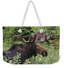 A Bull Moose Among Tall Bushes Weekender Tote Bag