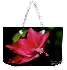 Weekender Tote Bag featuring the photograph A Cactus Flower 2 by Victor K