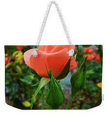 Weekender Tote Bag featuring the photograph A Delicate Pink Rose by Chad and Stacey Hall