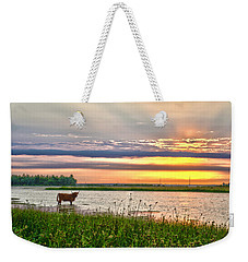 A Highland Cow In The Lowlands Weekender Tote Bag