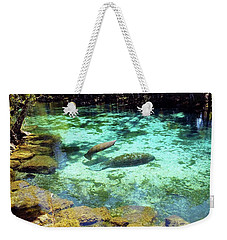 A Manatee Calf And Cow  Weekender Tote Bag