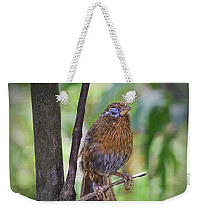 Weekender Tote Bag featuring the photograph A Melodious Thrush by Judy Kay