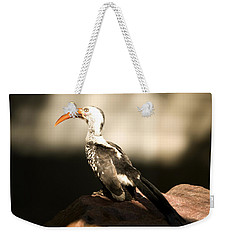 A Red-billed Hornbill At The Lincoln Weekender Tote Bag