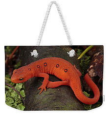 A Red Eft Crawls On The Forest Floor Weekender Tote Bag