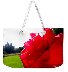 Weekender Tote Bag featuring the photograph A Rose In The Sun by Robert Knight