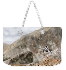A Ruddy Turnstone Perched On The Rocks Weekender Tote Bag