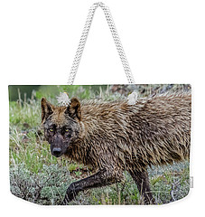 Weekender Tote Bag featuring the photograph A Star In Lamar by Yeates Photography
