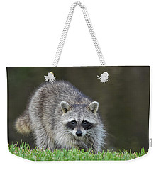 A Surprised Raccoon Weekender Tote Bag