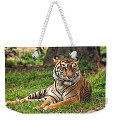 A Tiger Relaxing On A Cool Afternoon Weekender Tote Bag by Jim Fitzpatrick