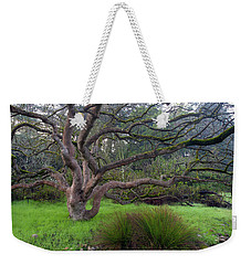 Weekender Tote Bag featuring the photograph A Tree In The Park  by Catherine Lau