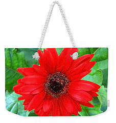 Weekender Tote Bag featuring the photograph A True Red by Sandi OReilly