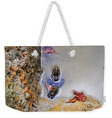 Weekender Tote Bag featuring the photograph Adopted Amphibian by Al Powell Photography USA