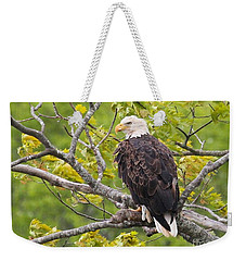 Weekender Tote Bag featuring the photograph Adult Bald Eagle by Debbie Stahre